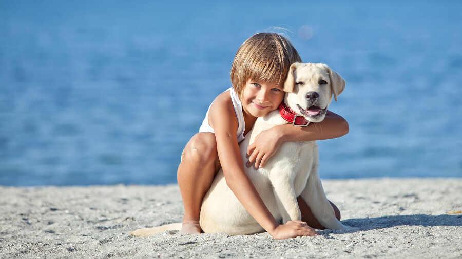 Особенности отдыха в Анапе с животными