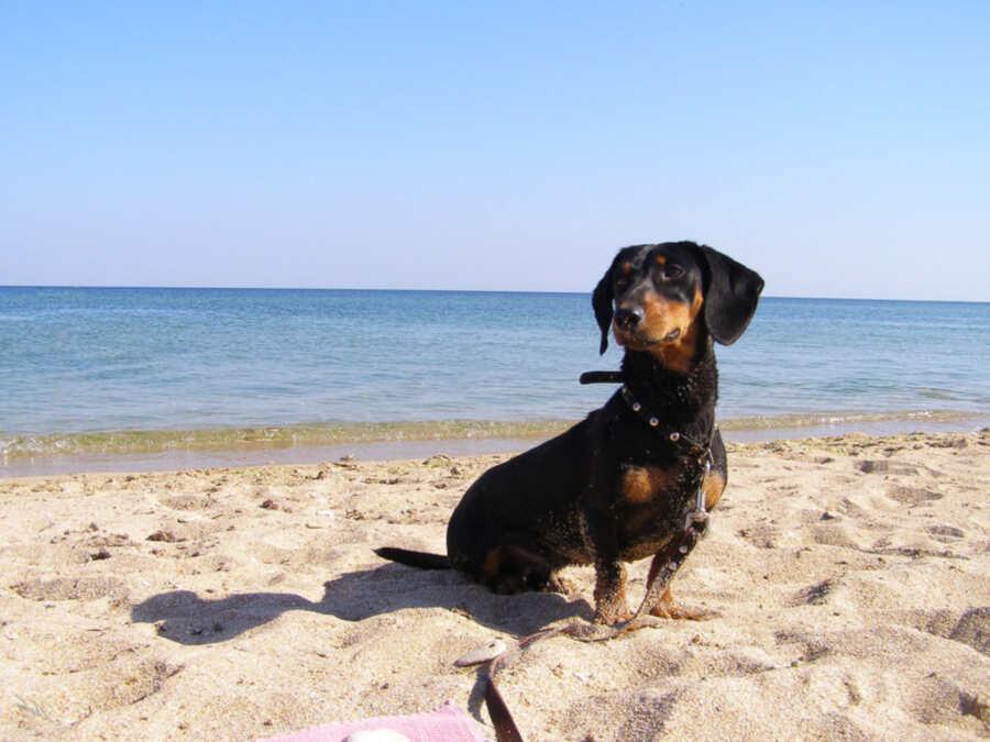 Отдых в Ейске с собакой